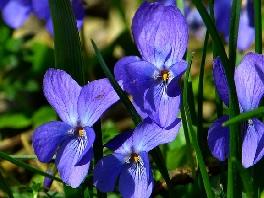 violets floral gift